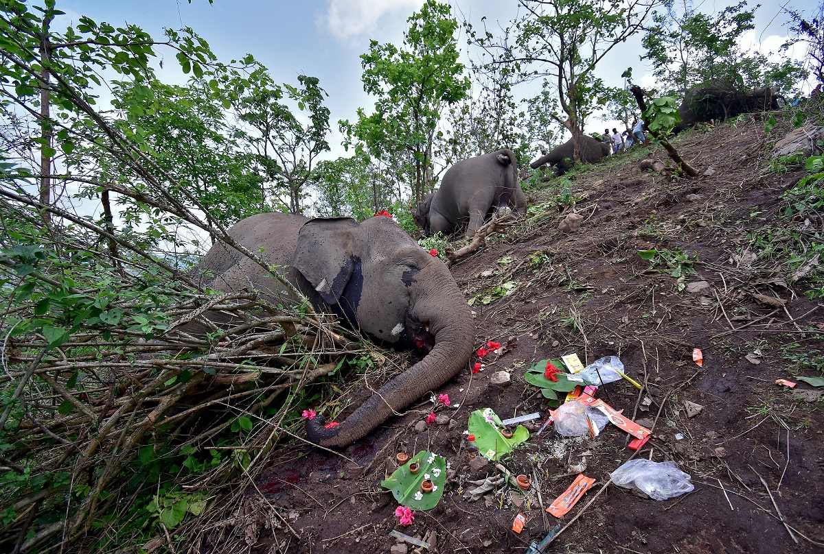 Officials Say Lightning Strike May Have Killed 18 Wild Elephants in Assam