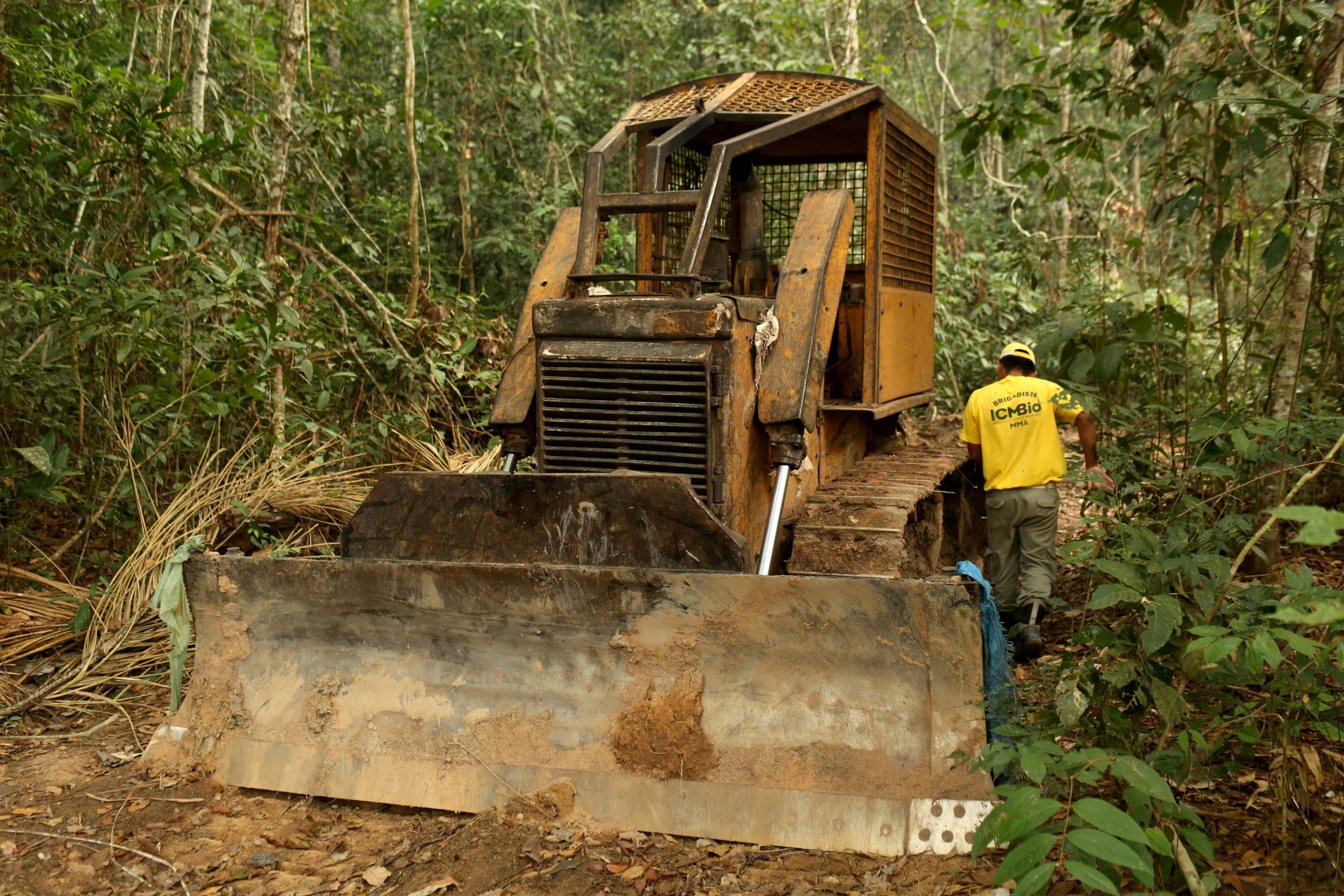 science.thewire.in: Forest Rangers Struggle To Prevent Poaching Amid Lockdowns