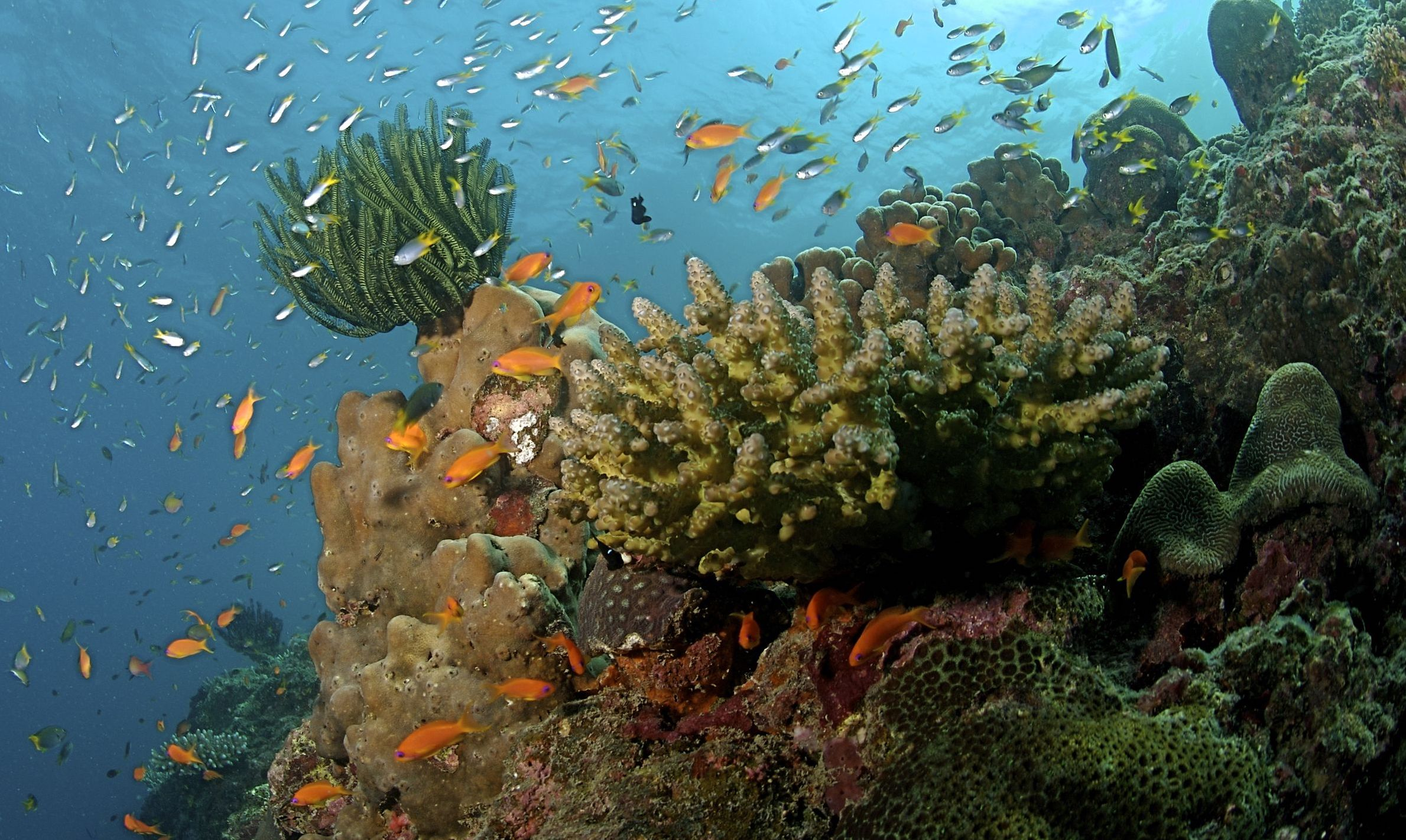 Why the Wildlife Act Isn't the Best Tool With Which To Conserve Marine Ecosystems – The Wire Science