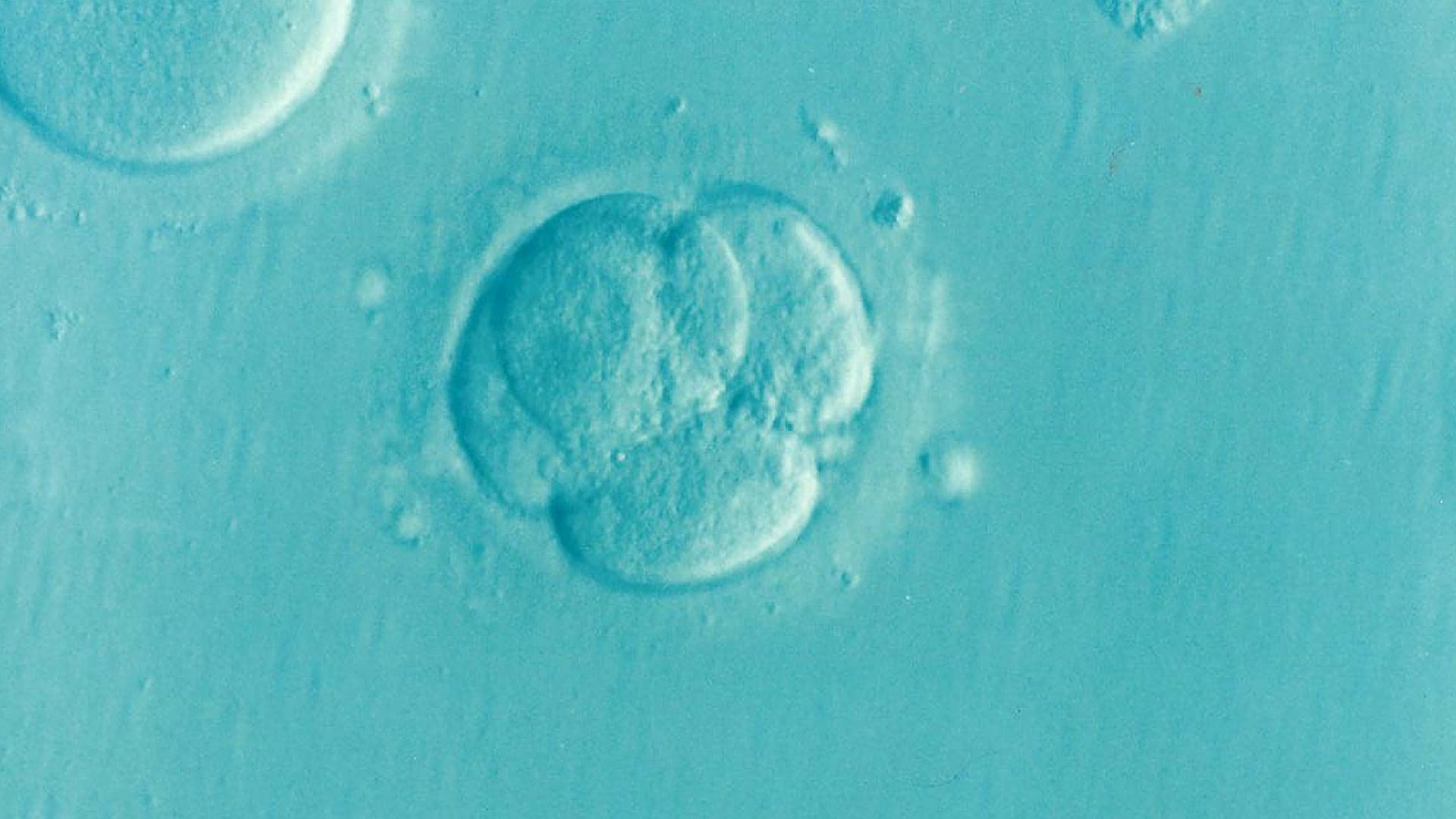 人类胚胎研究的限制已经改变。是时候公开辩论了。
