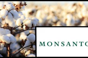Pegasus Project: Monsanto Officials Were Under Scanner as Maharashtra Probed Bt Cotton Seed Network