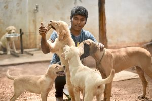 Though Well-Intentioned, Courts' Recognition of Rights for Animals Is Legally Problematic