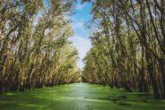我们需要带回红树林 - 但我们知道如何?