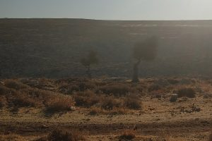 Palestine: Can a Handful of Adolescent Criminals Destroy an Entire Village?