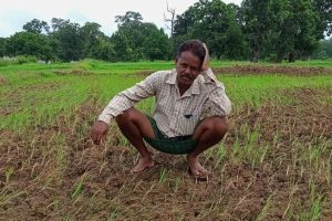 Odisha: Depleting Ground Water Level, Drought-Like Situation Leave Paddy Farmers Grim