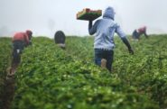 Pandemic, Climate Change and Conflict Fuel Sharp Rise in Global Hunger