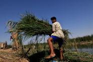 Climate Change, Pollution and Dams Threaten Iraq's Marsh Arabs